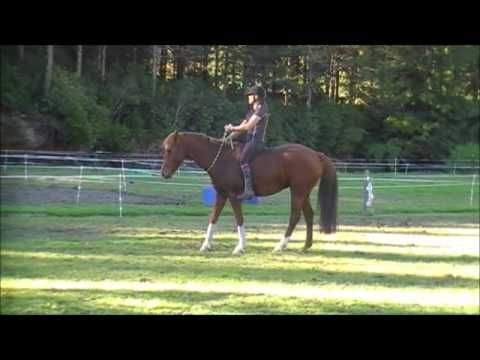 JJ bareback & bridleless with Vicki Wilson - YouTube