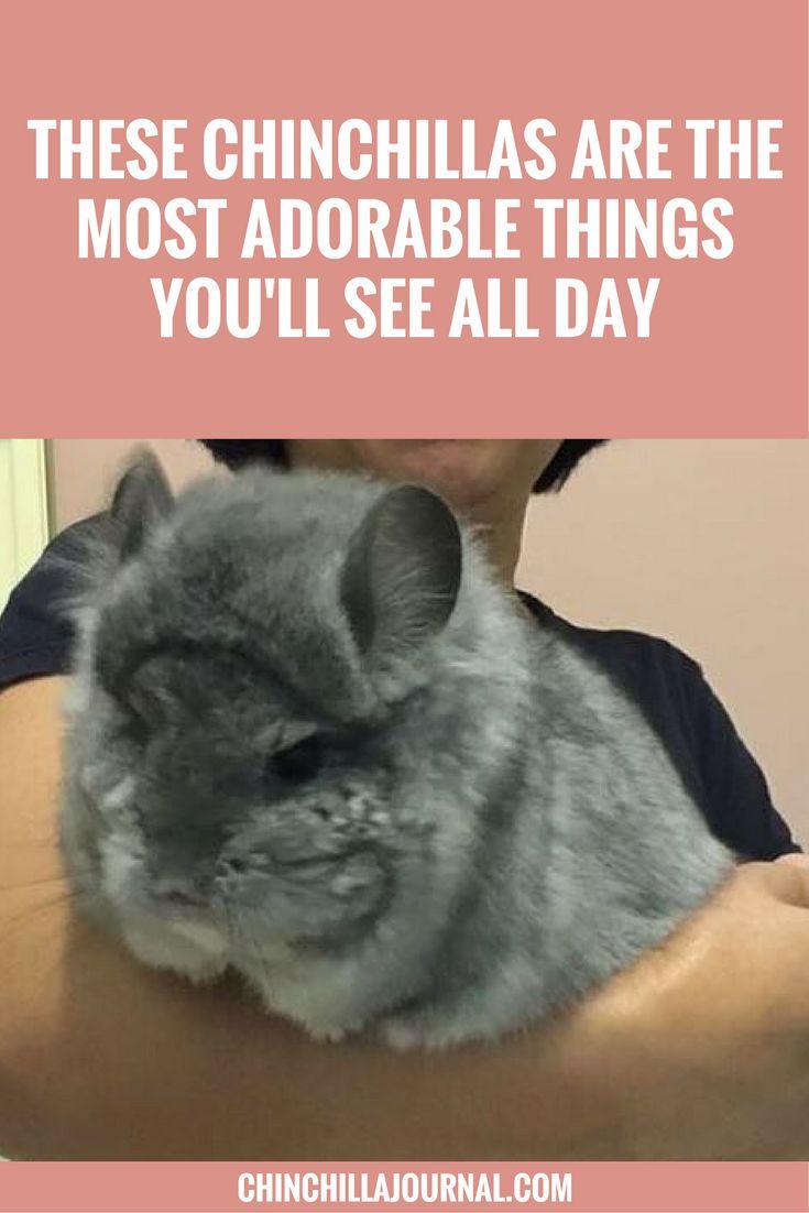 7 best My diy chinchilla toys images on Pinterest | Chinchillas ...