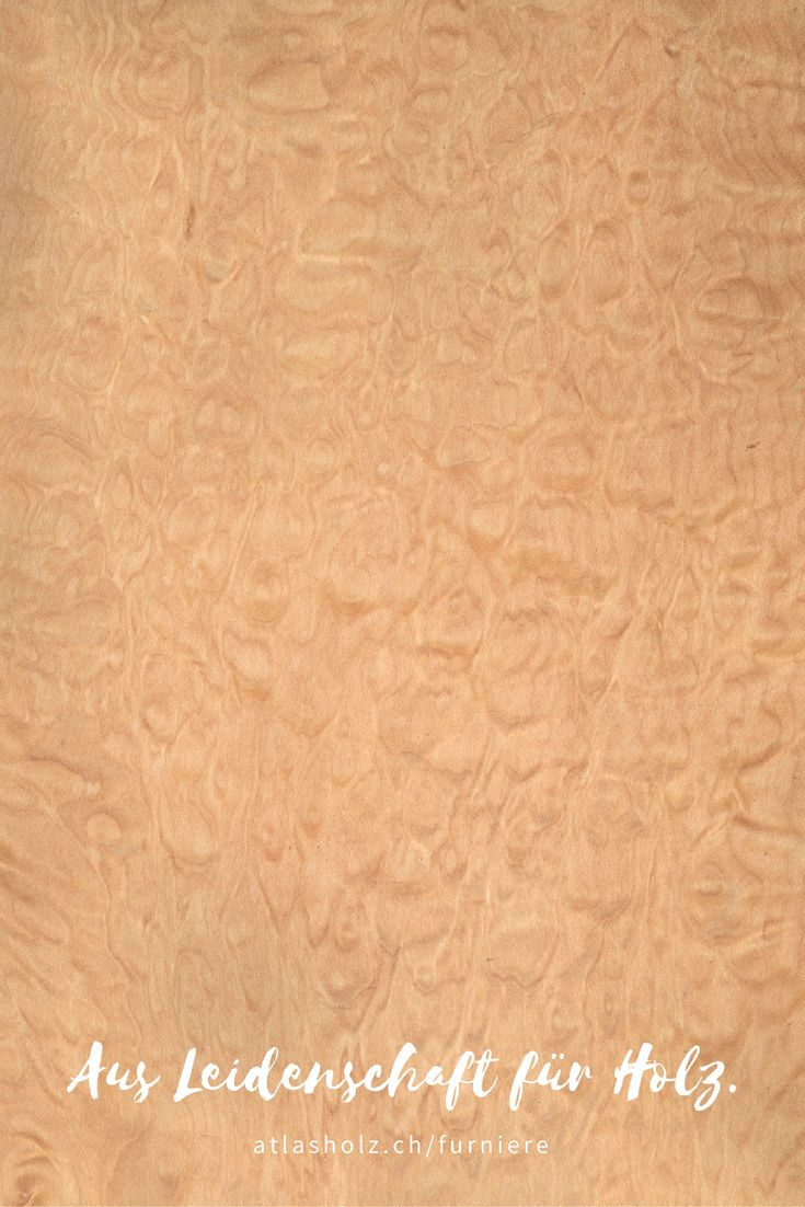 Furniere Ahorn gemuschelt | Veneers quilted Maple | Botanischer Name/Botanical Name: Acer macrophyllum
