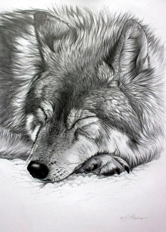 Realistische Tier-Bleistiftzeichnungen (3),