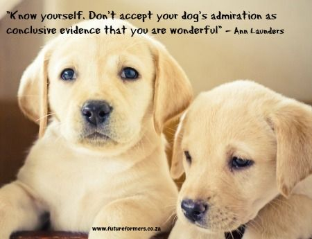 Dog's admiration