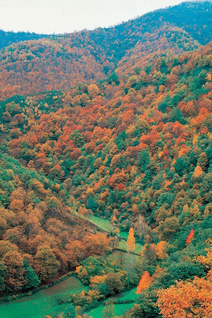 Reserva Natural de Muniellos (Asturias)