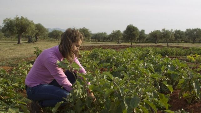 Everyone can be a farmer, this is your chance | Sustainable Ecotourism Farm, Sustainable Nature Travel Experience | Combadi