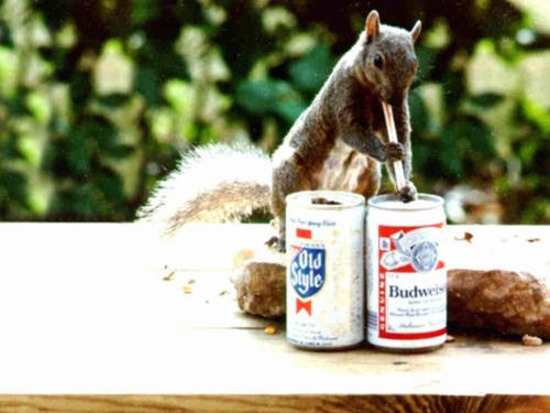 Pin On Squirrels