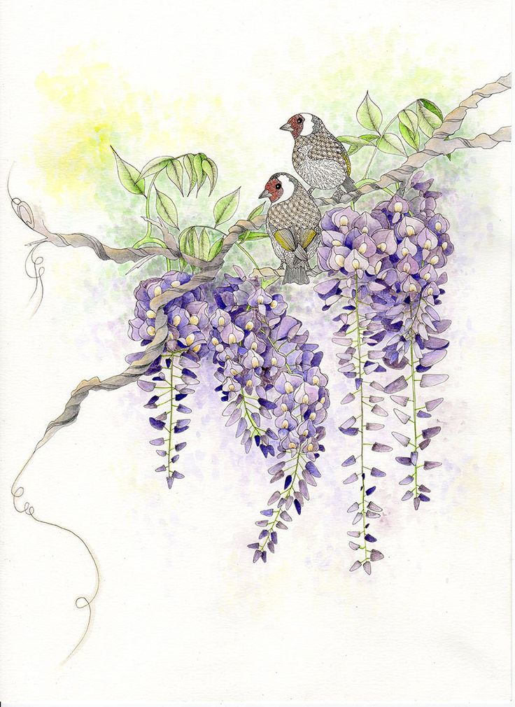 original painting of wisteria  u0026 goldfinch  original