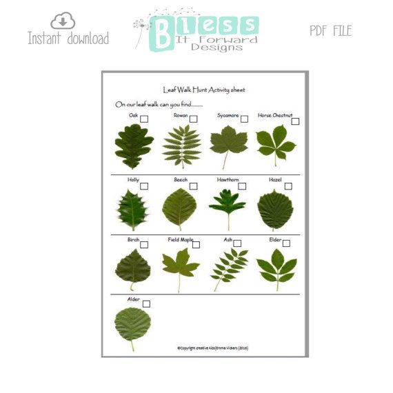 Leaf Walk Activity Sheet  childcare / teaching by BlessItForward