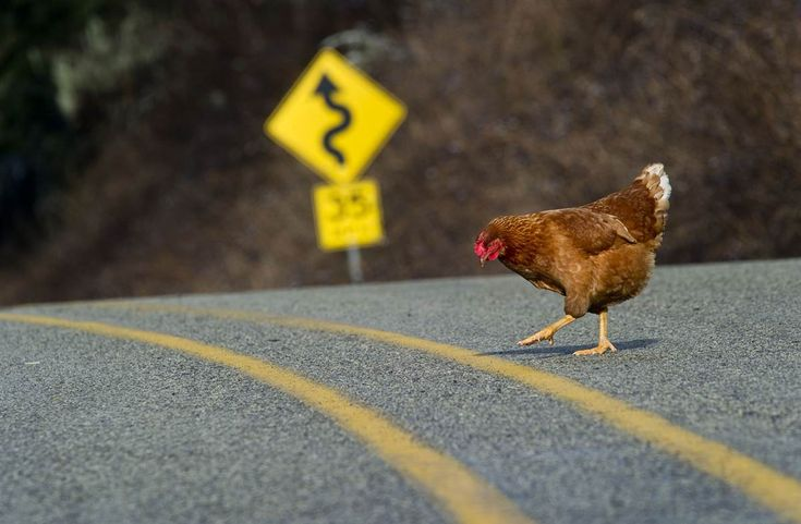 Why did the chicken cross the road? Please comment if you have any idea.