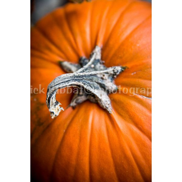 Pumpkin Photo Digital Download Fine Art Photography Autumn Fall Colors... (6.18 CAD) ❤ liked on Polyvore featuring home, home decor, holiday decorations, orange home decor, orange home accessories, textured home decor, autumn home decor and halloween home decor
