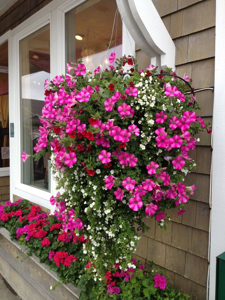 675 best Hanging Baskets images on Pinterest Hanging baskets