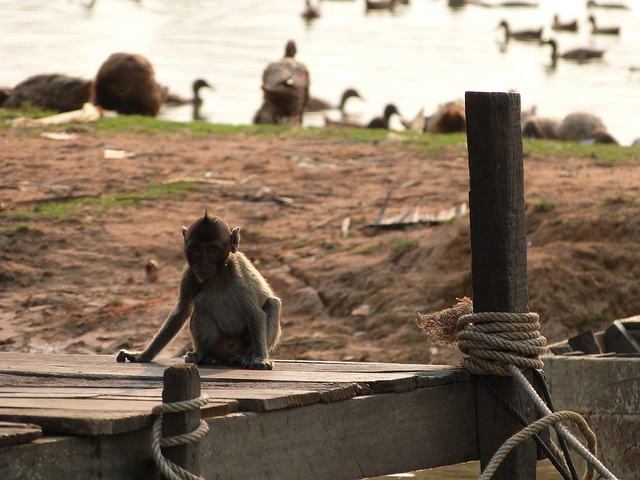 Lonely monkey @ the Tongle-Sap lake (Cambodja) - Tom Hermans by Thomas Cook Belgium, via Flickr