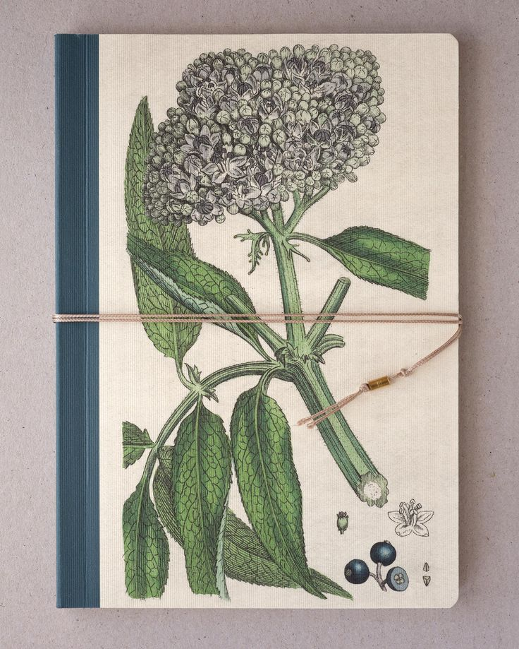 Notebook, Sketchbook - Elder, Elderberry, Pipe-tree 10€/one  https://www.etsy.com/listing/538369577/notebook-sketchbook-elder-elderberry?ref=shop_home_active_9