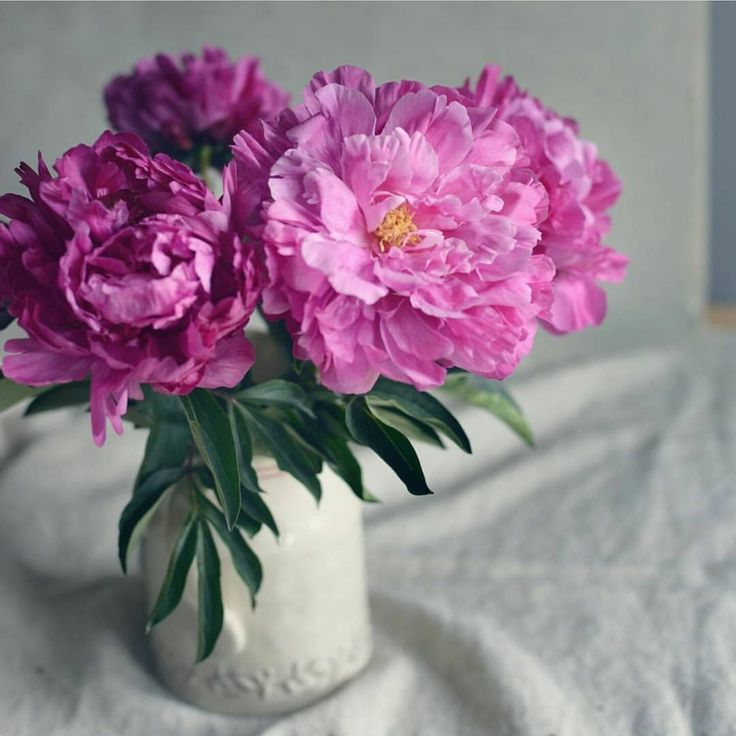 """4,030 Likes, 30 Comments - Addicted to ALL things peonies (@peony_addict) on Instagram: """"😍🍃 Can we just talk about those under appreciated peony leaves for a second. Deepest green and…"""""""