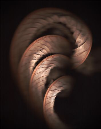Leaf, scanner photo by Brian Ross Haslam.