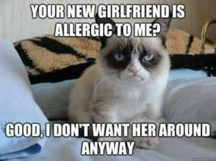 Funny Cat Drinking Meme : Best grumpy cat images funny stuff funny