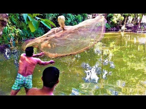 Amazing Net Fishing   INCREDIBLY Cast Net Fishing in Pond Near My Home #5