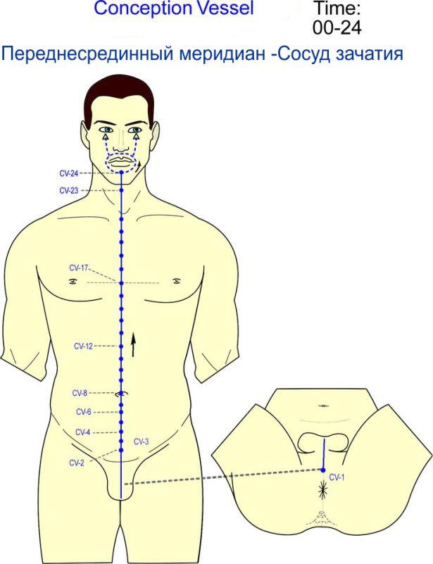 Переднесрединный меридиан - Сосуд зачания - Triquetra Технологии Здоровья Традиционная китайская медицина и цигун