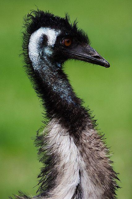 emu profile 1