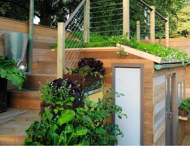 Zdjęcie numer 3 w galerii - Zielone dachy