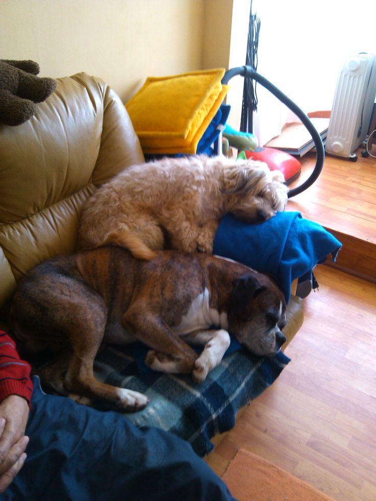 Fredy con Edu, amigos de siesta.