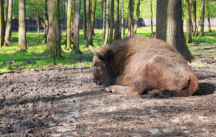 Rezerwat Borki na Mazurach, anna piernikarczyk