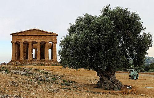 El templo y el olivo