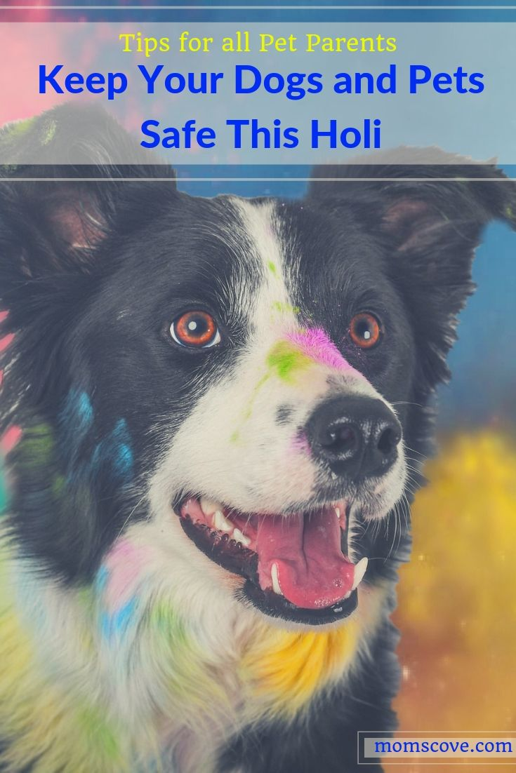 Keep Your Dogs And Pets Safe This Holi Tips For Pet Parents