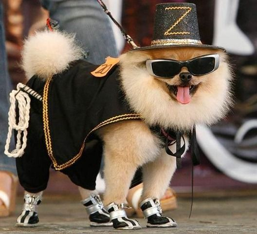 www.dogpawfile.com