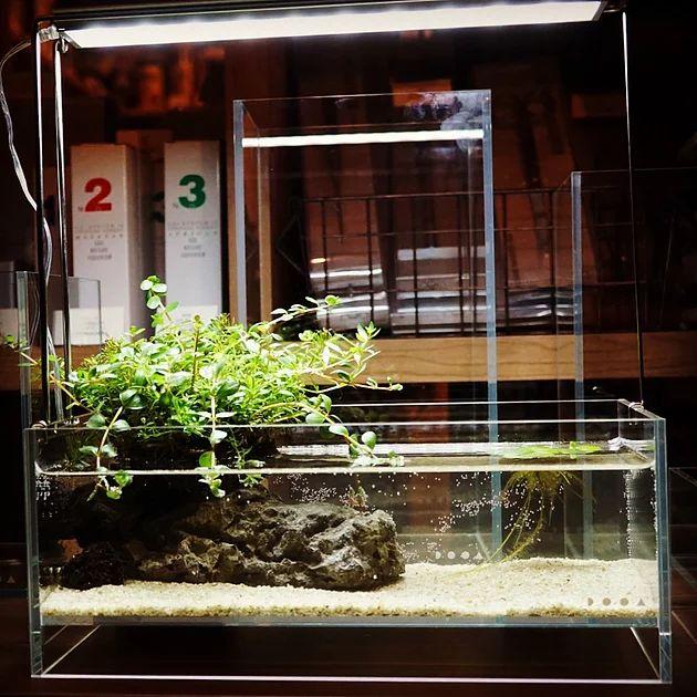 さよならDo!aqua、こんにちはDOOA | aquariumshop suisai