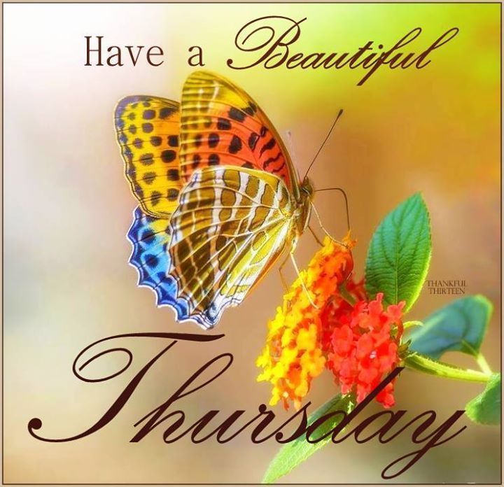 Have a beautiful Thursday ~ From my Dear Friend ~ Mitz