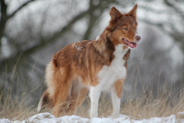 47 best Dog Breeds with Odd Colors & Coats images on ...