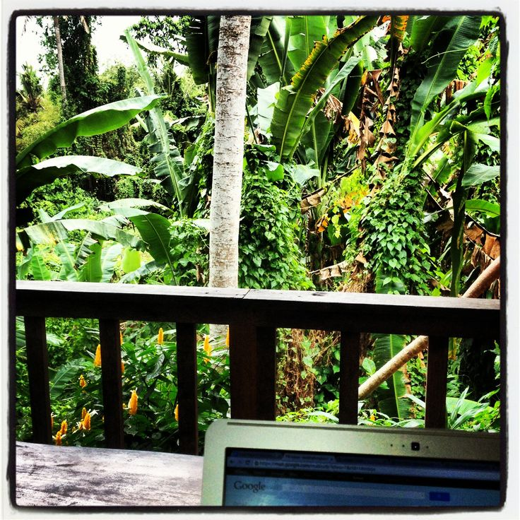 My jungle office. xx Carole