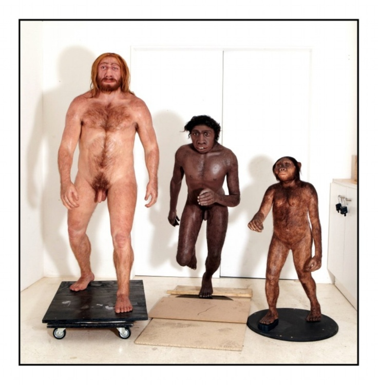 The final model of Neanderthal Man, the Homo Erectus and Lucy