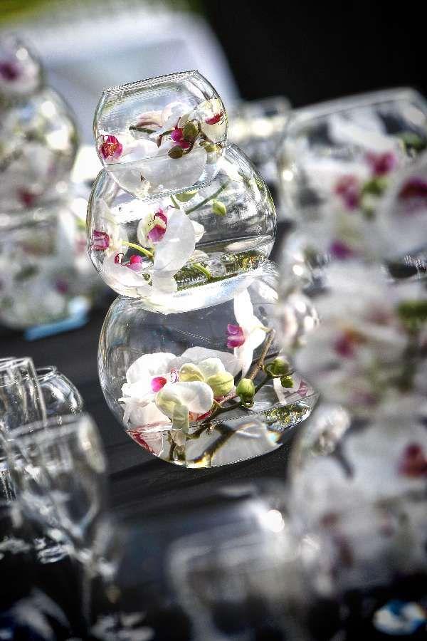 Best images about betta fish tank ideas on pinterest