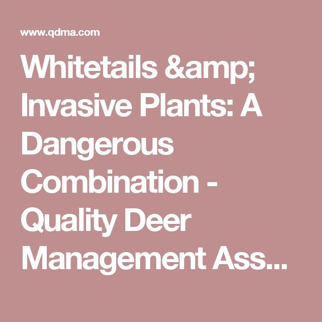Whitetails & Invasive Plants: A Dangerous Combination - Quality Deer Management Association