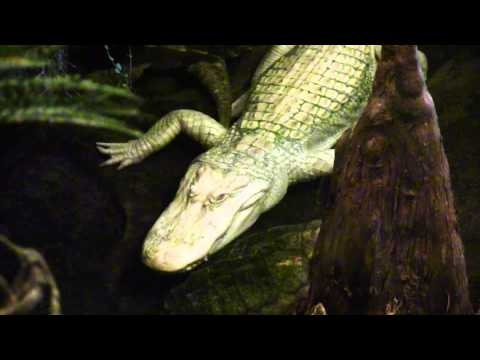 VIDEO: San Francisco California Academy of Sciences NightLife #travel