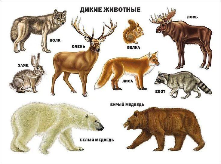 перестали скрывать название всех животных в лесу с картинками чертой