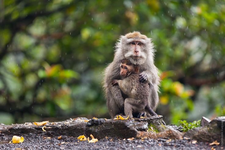 macaques + monsoon