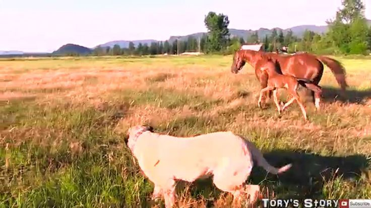 SUPER cute baby horse and her mom!