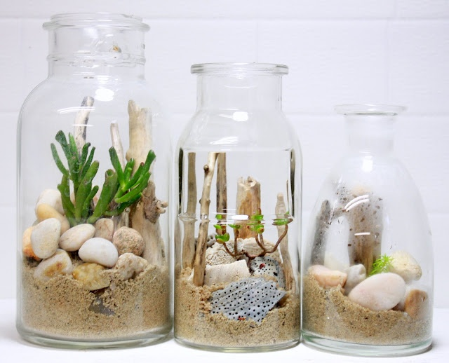 more terrariums from the Slug and Squirrel: Home Grown, Artsea Chic, Terrariums, Squirrels, Gardens, Beachterrarium, Diy Beachin, Beaches Art, Beaches Terrarium