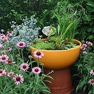 Container water gardens are a great way to get your feet wet with water… :: Hometalk