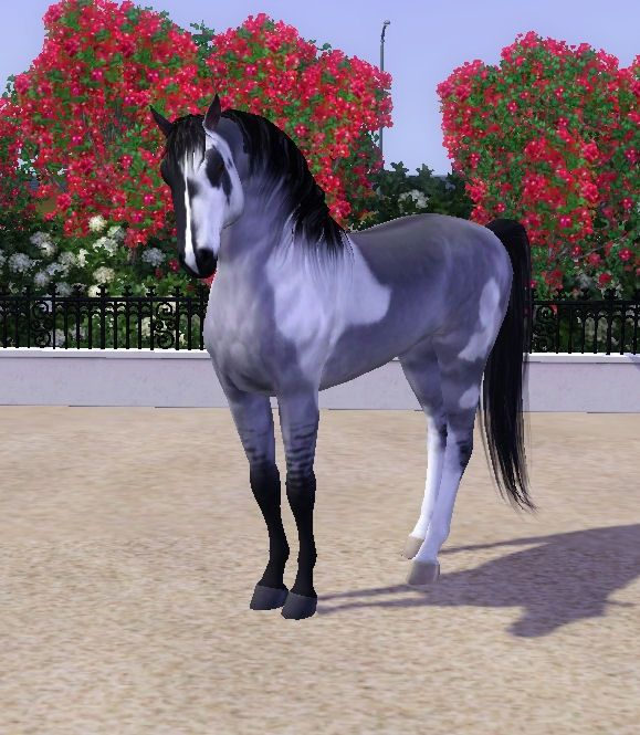 Sims 3 Horses Jumping | The Phantom by RivenWoodStables