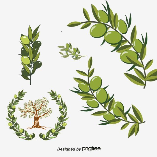 Vector Green Olive Branch Olive Branch Olives Leaf Png Transparent Clipart Image And Psd File For Free Download Olive Branch Branch Vector Green
