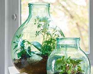 les 25 meilleures id es concernant terrarium pour plantes grasses sur pinterest terrarium. Black Bedroom Furniture Sets. Home Design Ideas