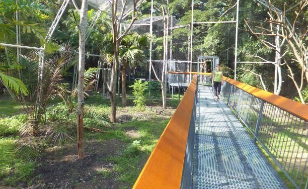 New tree-kangaroo exhibit at the Port Moresby Nature Park. http://www.blog.pagahill.com/#!The-Treasures-of-Port-Moresby/c2o6/55cddf280cf2b503a1a3f354