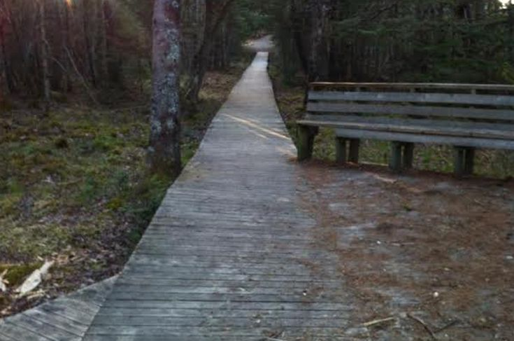 Forchu River Trail — 2km forest and riverside trail in Hebron, Nova Scotia