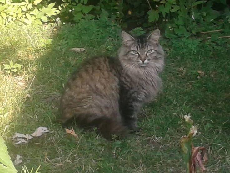 Souel Cat Adoption