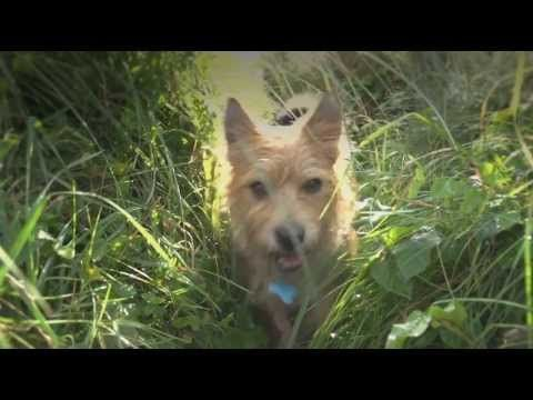 Dog friendly Cornwall. Lovely video from Visit Cornwall showing how wonderful it is for you and your dog