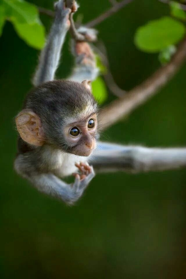 M -Monkey