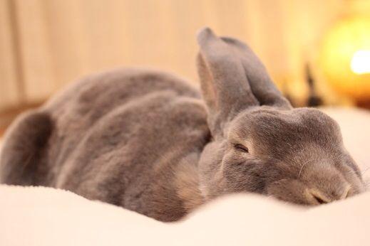 Deep in sleep. Sweet dreams