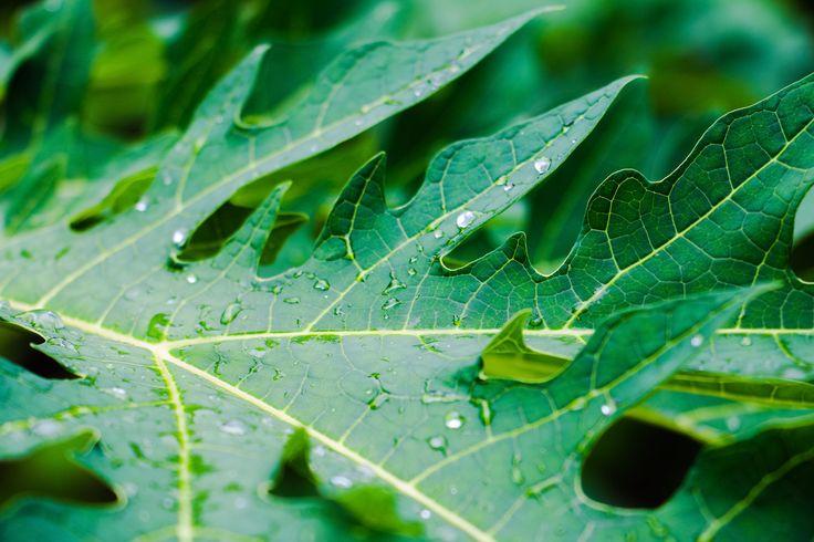 Leaf in the Botanical Gardens